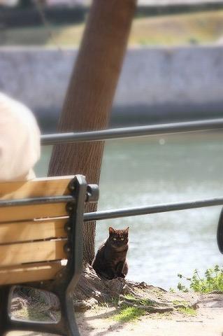 ベンチと猫