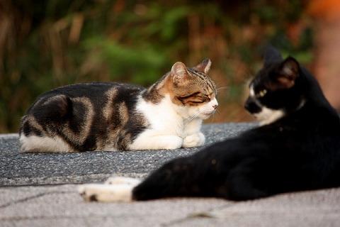 比治山の猫1