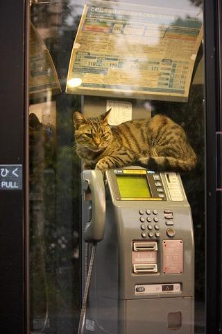 比治山のBOX猫