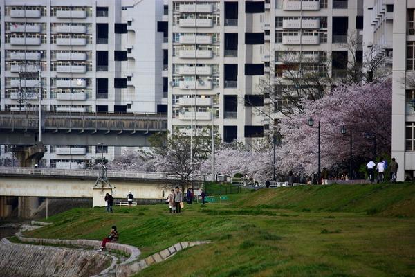 高層住宅と桜